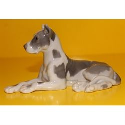 Grand danois  - Great Dane